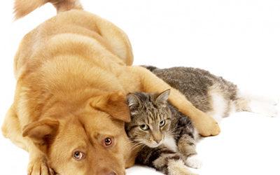Solutions de garde et soins aux animaux de compagnie (dogsitting/petsitting)